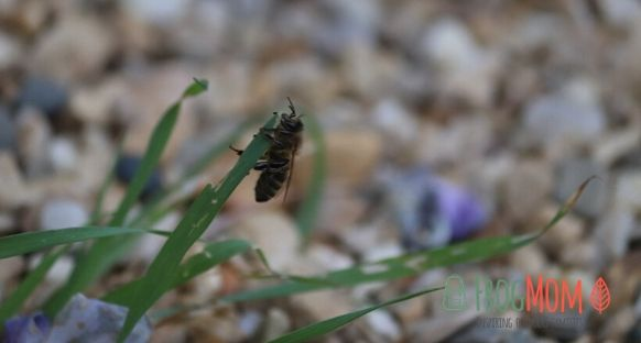 Single bee on blade of grass