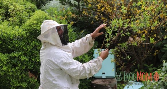 Beekeeper cuts branch with honeybees swarm
