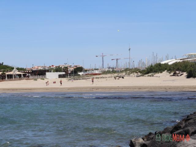 Cranes on the beach