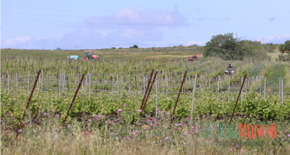 Tractors in vineyards, Occitanie