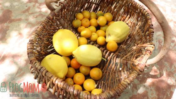 Lemons and oranges in a basket