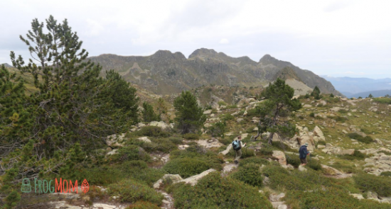 Mountain pines and GR10 in the Pyrenees