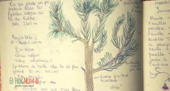 Nature journaling - pine tree