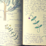 Botanical Nature Journaling & Biodiversity in the Mountains