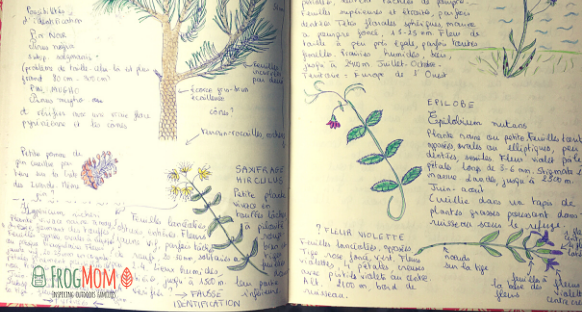 Nature journaling - yellow flower brain puzzle