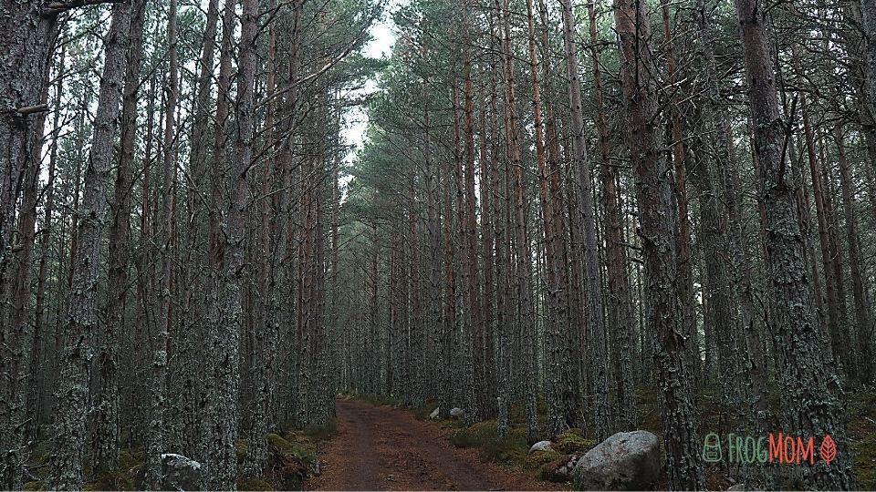 Rothiemurchus Estate - Iron bridge forest
