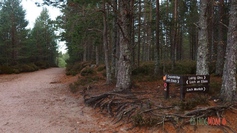 Rothiemurchus Estate - Trail junction to Loch an Eileen