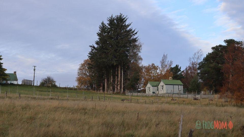 Rothiemurchus Estate - Farm