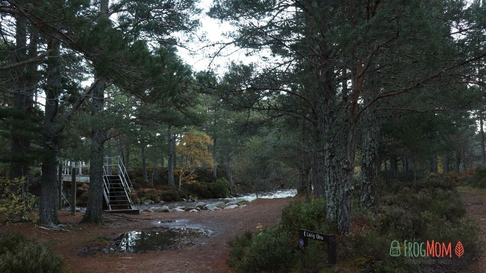 Rothiemurchus Estate - Iron bridge stairs