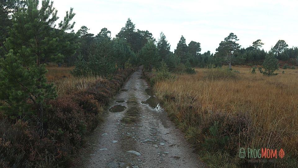 Rothiemurchus Estate - Trail to Loch an Eileen